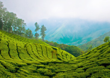In the rolling hills of Munnar