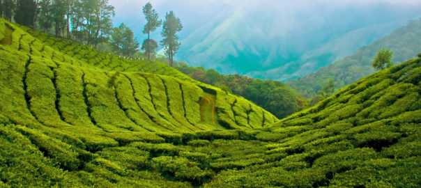 munnar_top_station-1