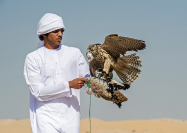 The sport of falconry in the UAE