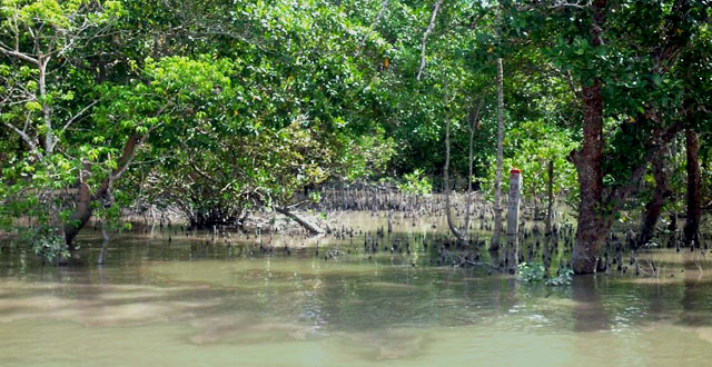 The magnificent mangrove forest Photo: West Bengal Tourism