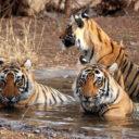 Sundarban National Park Photo: West Bengal Tourism