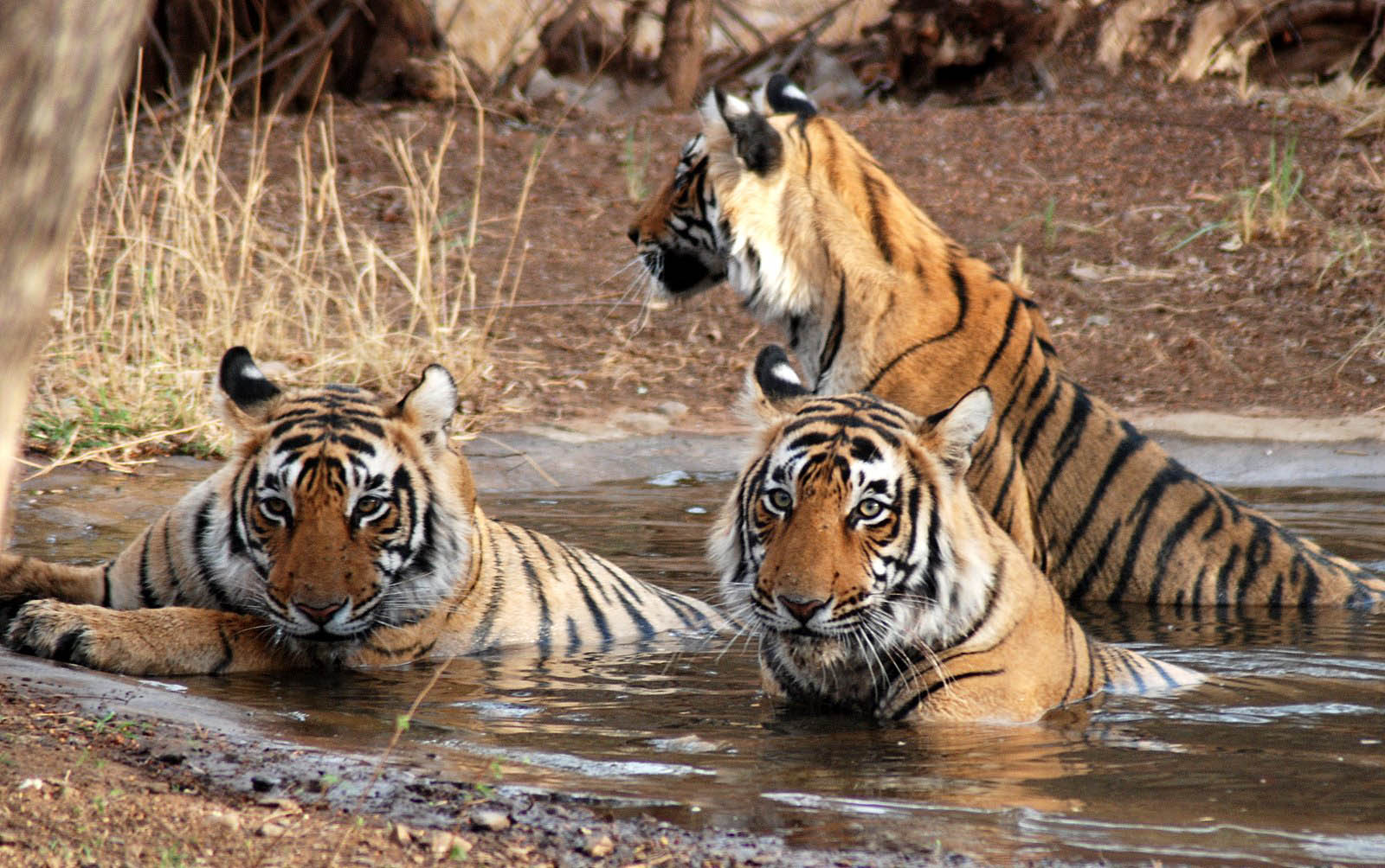 Sundarban National Park Photo: West Bengal Tourism