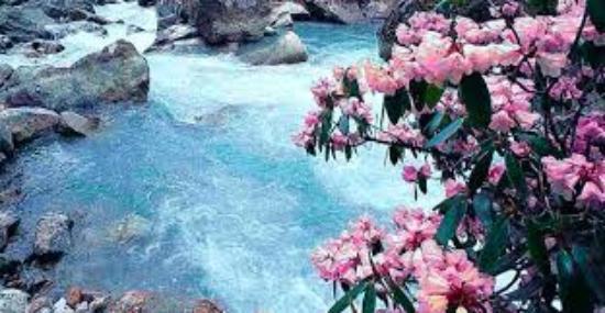 singba-rhododendron-sanctuary-tri-advisr