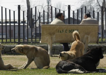 Are stray dogs a major problem in India?