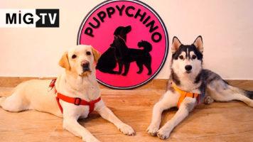 Puppychino Café & Spa