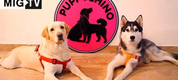 puppychino-thmbnail