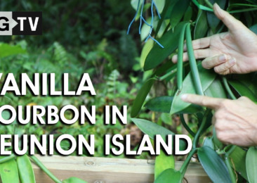 Vanilla Bourbon in Reunion Island