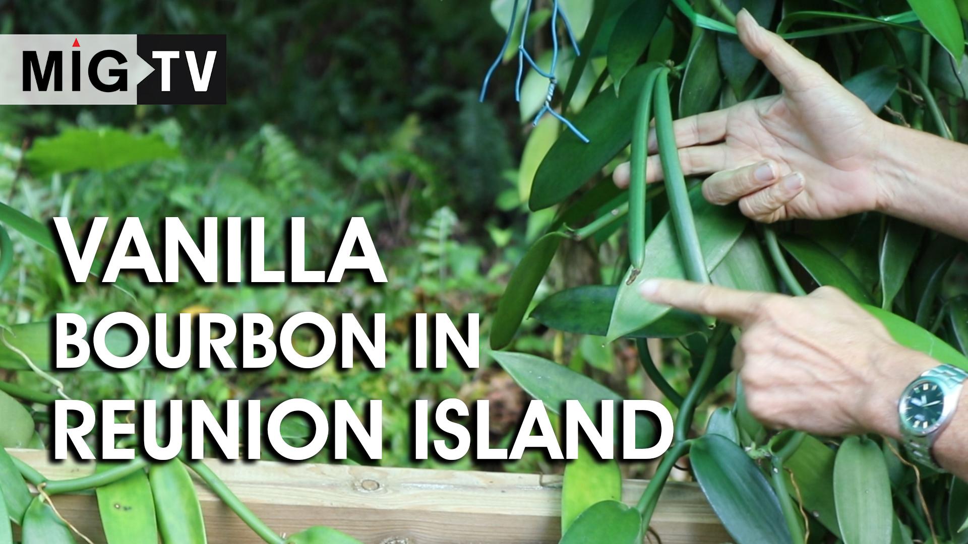 Vanilla Bourbon in Reunion Island