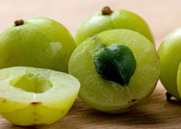 The bitter Indian gooseberry for a healthy lifestyle