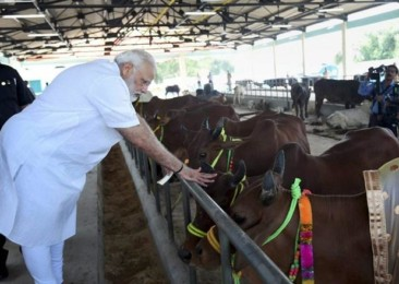 Everybody loves cows in India!