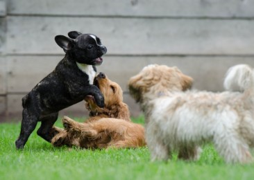 India's first dog park opens in Hyderabad