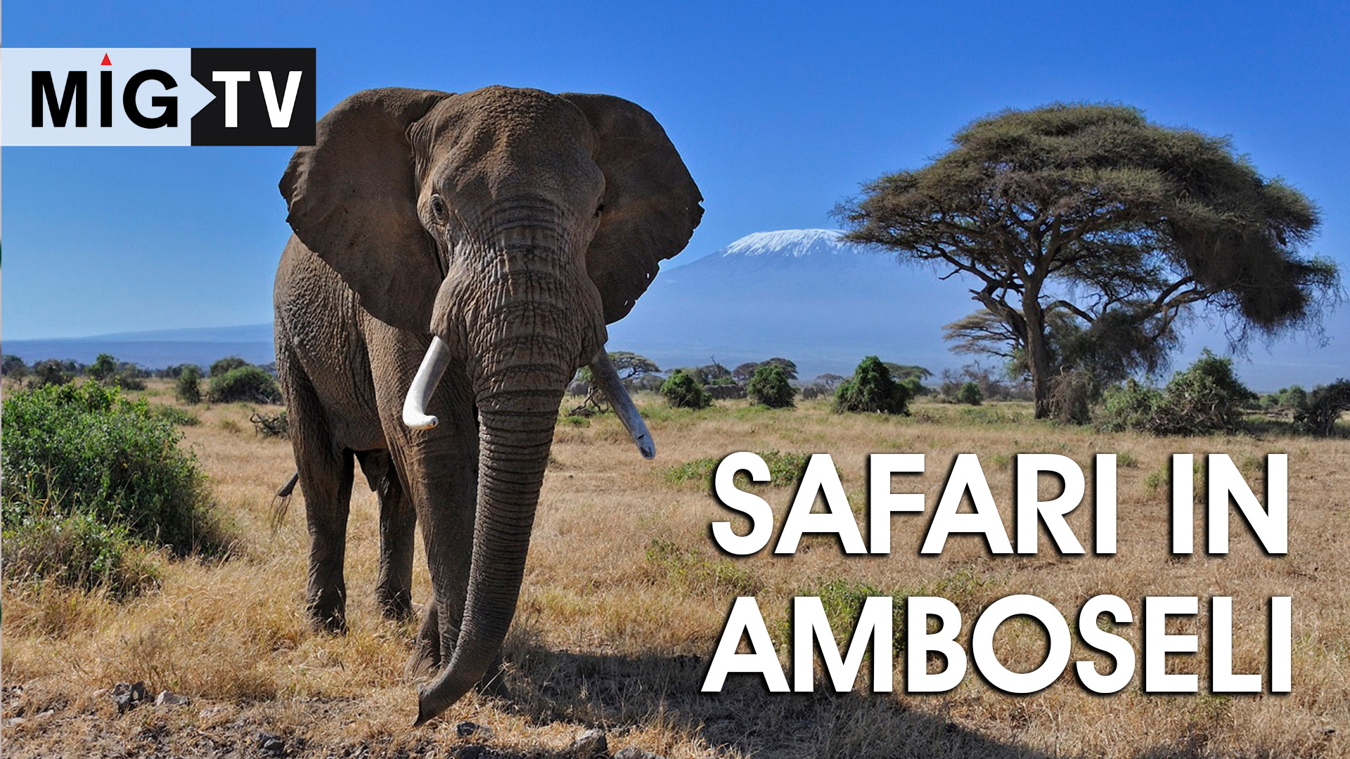 One day safari in Amboseli
