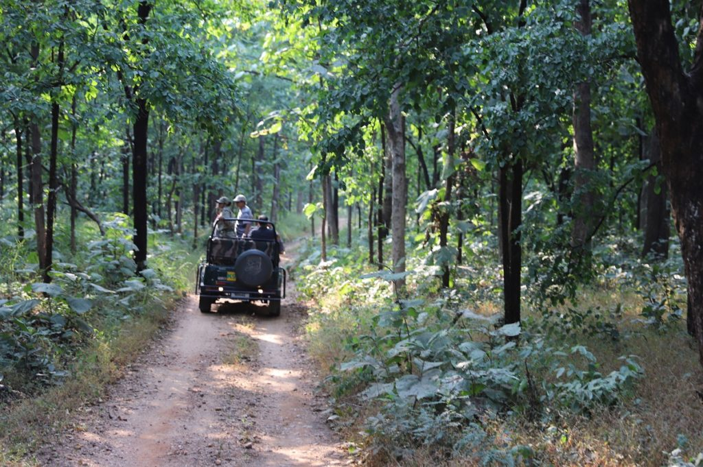The resort is only about three kms from the main gate of the Pench National Park