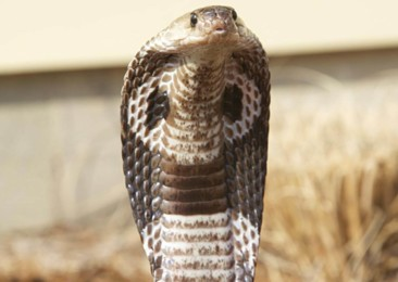An app to track snake bites and save lives