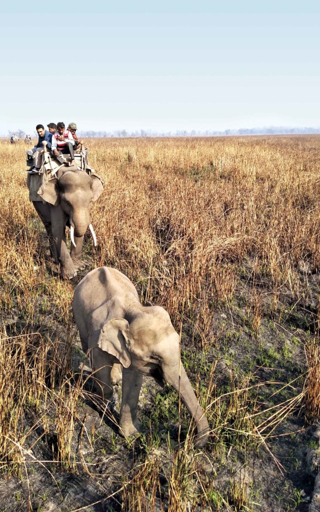 Rhino spotting from atop an elephant at Dudhwa National Park