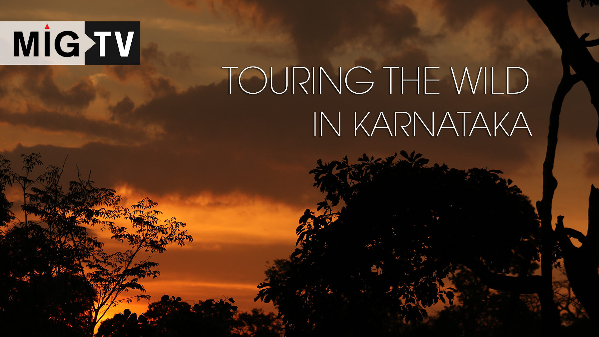 Touring the wild in Karnataka