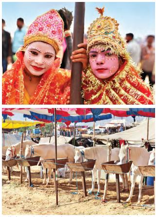 Establos de Marwari: los caballos se venden en una tienda que hace de establo temporal durante la feria de Pushkar