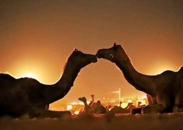 Un enriquecedor viaje a Pushkar