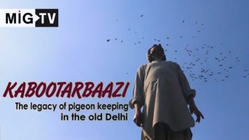 Kabootarbaazi: The legacy of pigeon keeping in the Old Delhi