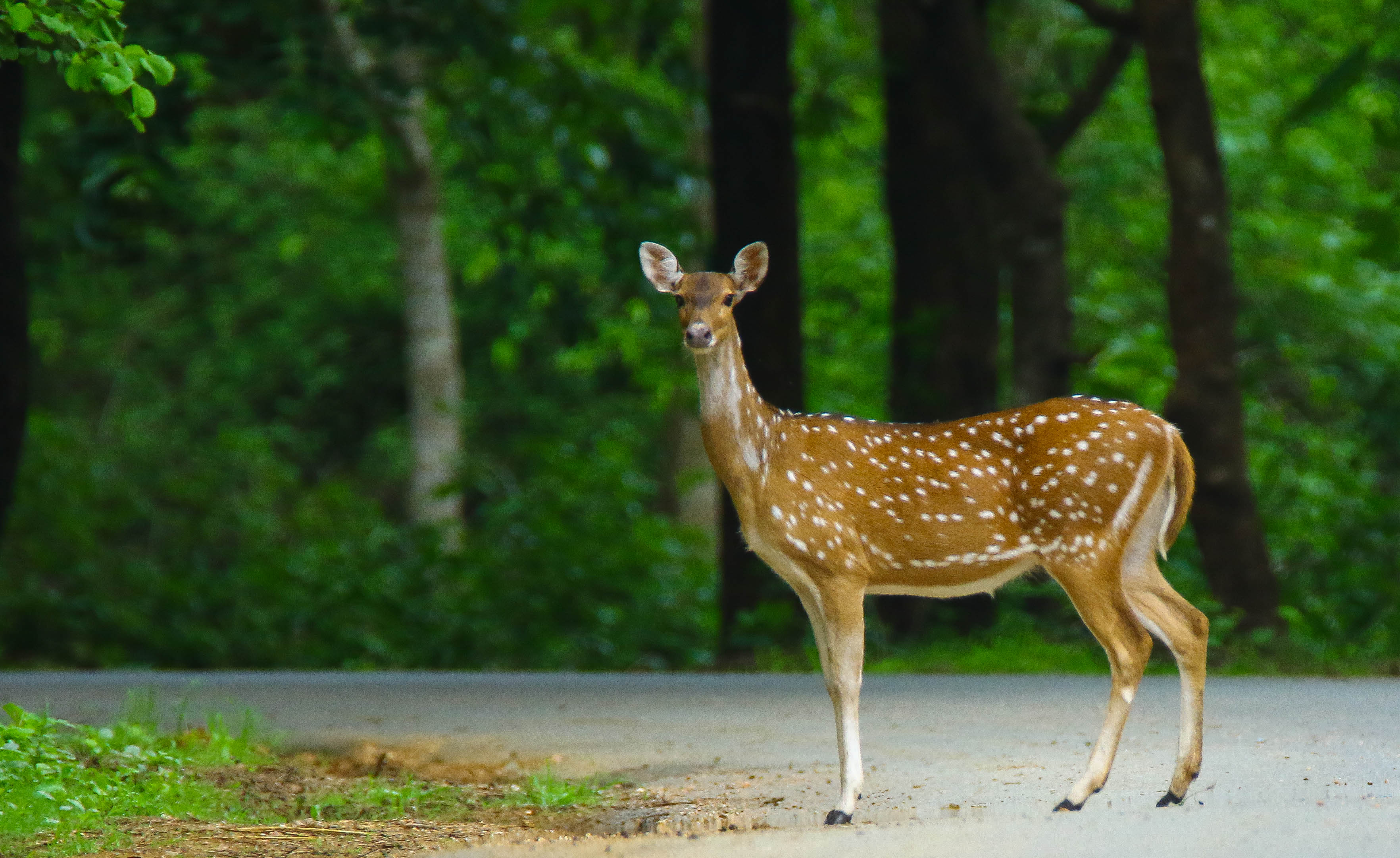 dandeli-wildlife