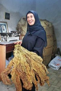 An Emirati woman with tobacco leaves