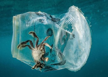 Diving into an ocean of plastics