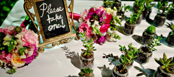 eco-friendly-wedding-guest-favors-succulents