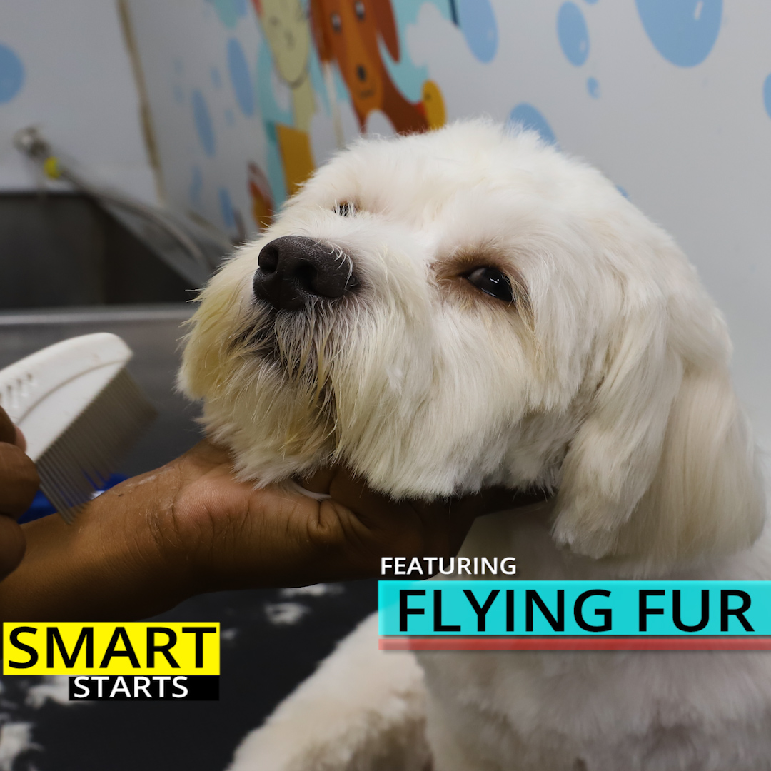 Smart Starts feat. Flying Fur