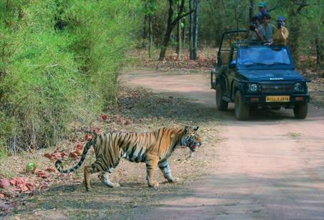 tourisme-animalier