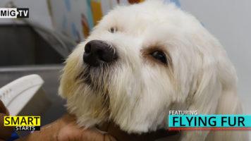 Smart Starts feat. Flying Fur