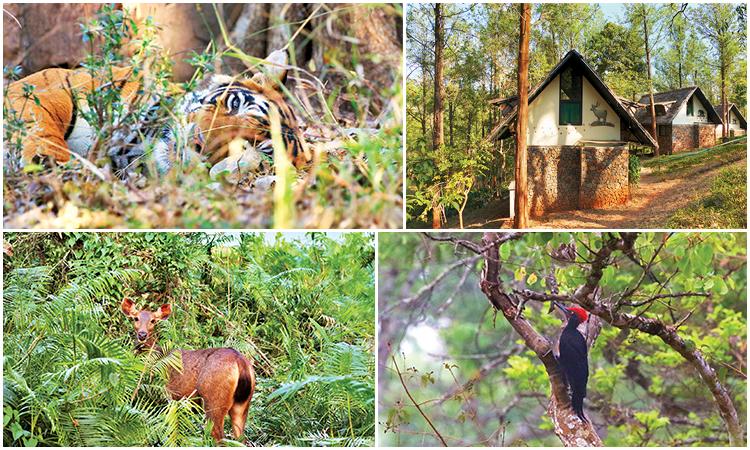 Dans la réserve BRT, au Karnataka, l'écolodge Gorukana tenu par l'ONG VGKK permet de s'imprégner des ambiances des forêts sacrées de la tribu soliga