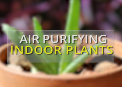 Five indoor plants that purify air