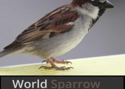 World Sparrow Day 2020
