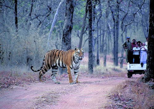 International Tiger Day: Five must visit Tiger Reserves in India