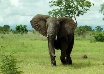 World Elephant Day2020: Elephants as Ecosystem Engineers