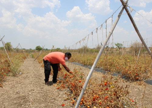 Agricultural reform bills ignore lessons from other countries