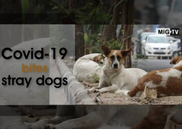 Covid-19 bites stray dogs in India hard