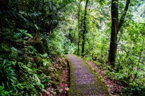 Mawsynram-Jungle
