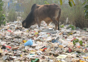 Plastic poison spreads unchecked