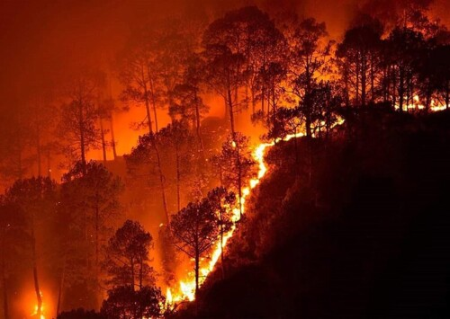 India witnessing a frenzy of forest fires in 2021