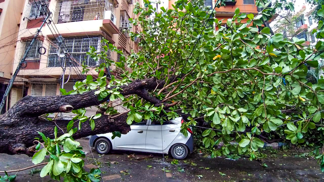 Increasing cyclones and garbage deposits, a nod towards extreme climate change