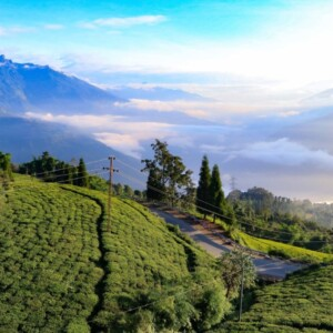 International Tea Day: Tea, tourism & treat for travellers