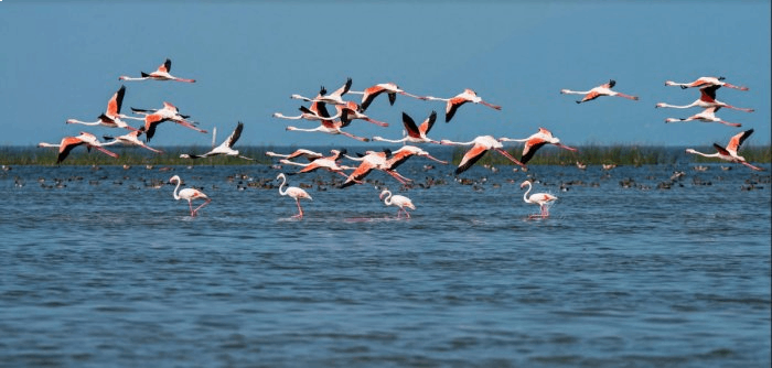 Best lakes in India for birding enthusiasts