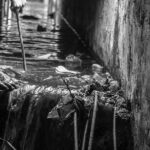 Government in denial over manual scavenging deaths